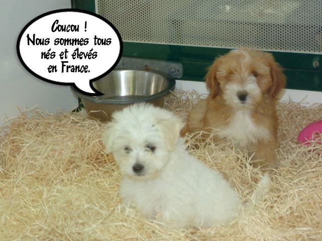 La maison du chiot alimentation accessoires toilettage for Alimentation chien maison